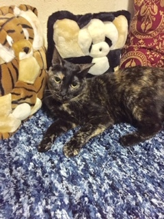Zoe is a 3 years old female cat and is ready to spend the rest of her life with you