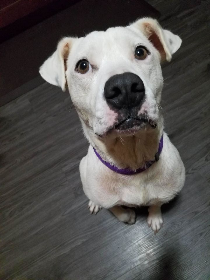 Izzy, an adopted Mixed Breed in Madison, WI