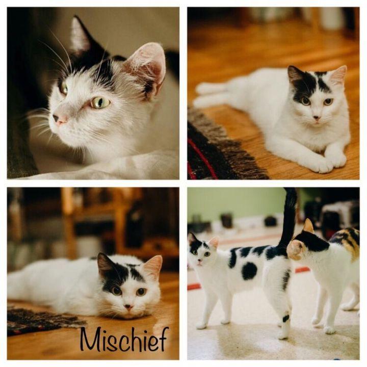 Mischief 1