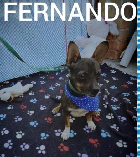 . Fernando .