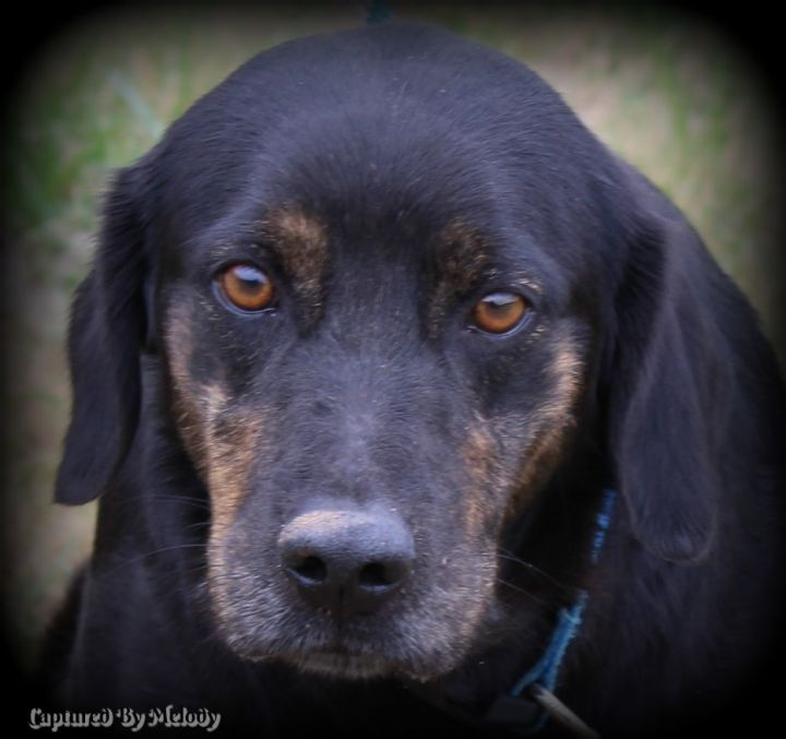 Heathcliff, an adopted Hound in Cynthiana, KY