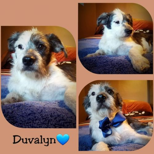 . Duvalin .