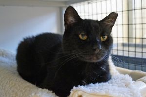 Trix is a bit reserved but willingly accepts pets He is quickly adapting to the Shelter environment