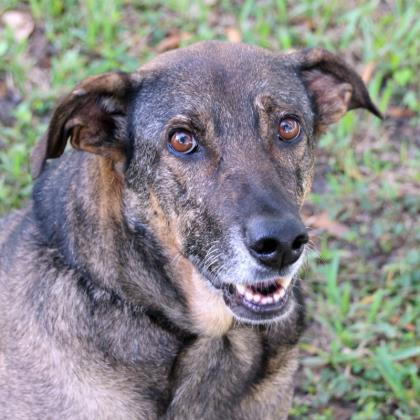 Mandy, an adoptable Mixed Breed in Loxahatchee, FL
