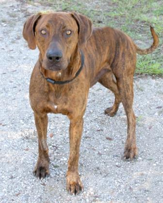 Milton, an adoptable Mixed Breed in Loxahatchee, FL