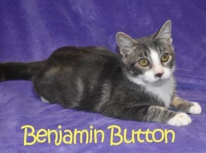Benjamin Button 1