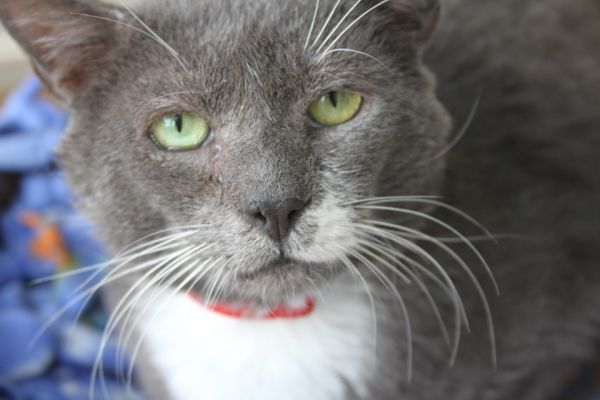 Elmer, our special needs lover boy!