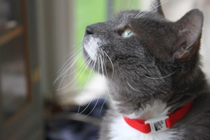 Elmer, our special needs lover boy! 5