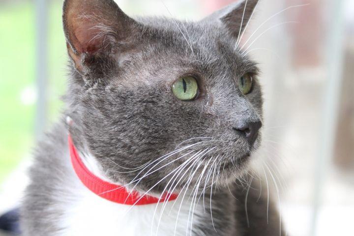 Elmer, our special needs lover boy! 1