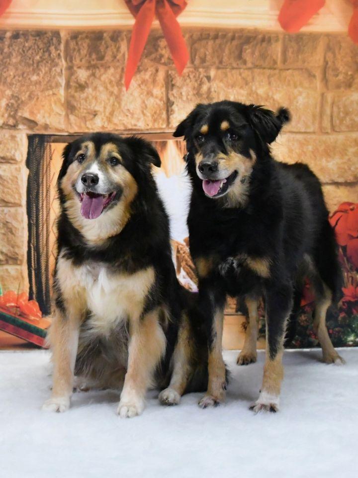 Shay & Ruby 1