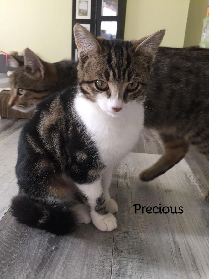 Precious and Stripes (bonded pair)