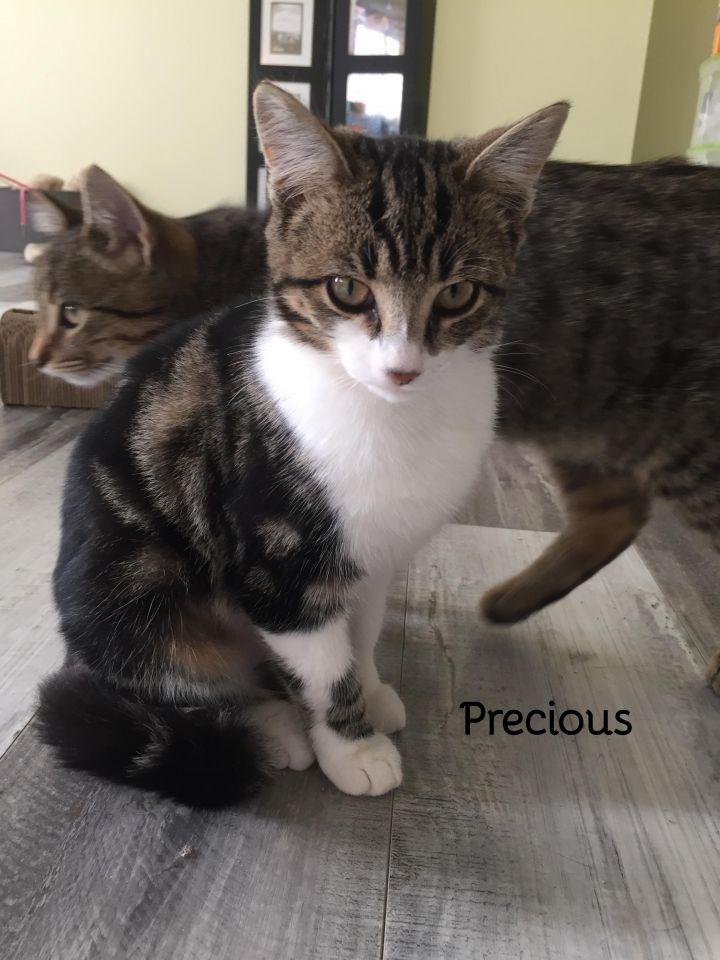 Precious and Stripes (bonded pair) 1