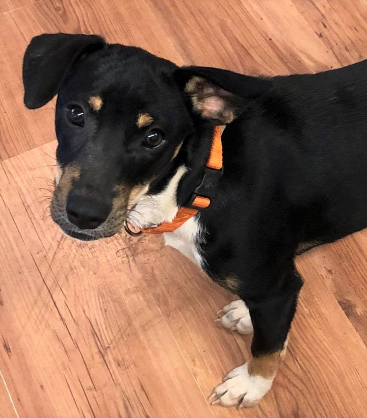 Zoe, an adoptable Mixed Breed in Northwood, NH
