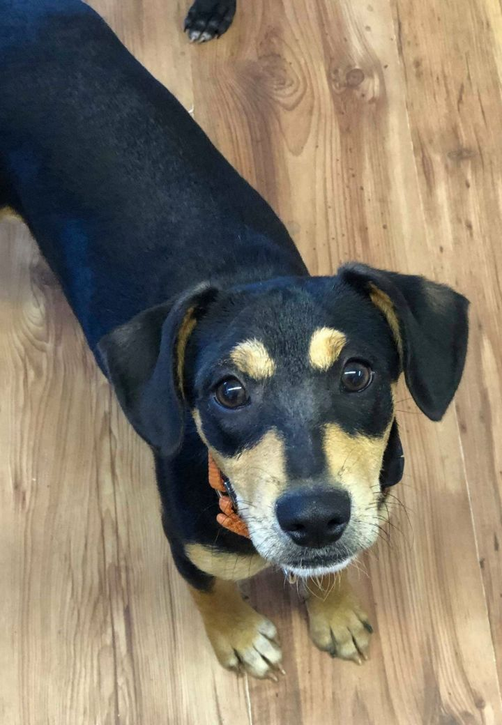 Zara, an adoptable Mixed Breed in Northwood, NH