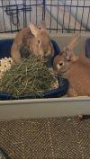 Pikachu & Pippin