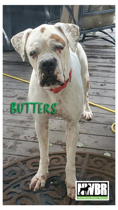 Butters 2