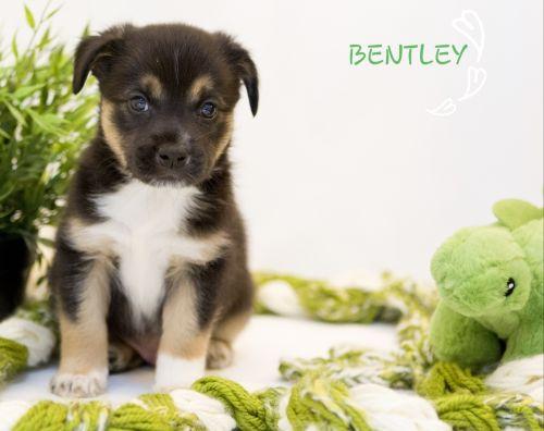 . Bentley .