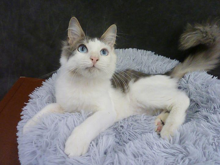 Blue-eyed Malone 2