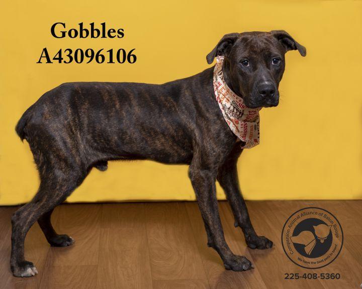 Gobbles 3