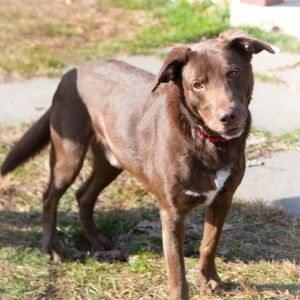 DOB 81215 Harley is a sweet and loving boy that is full of energy He loves chasing around tennis