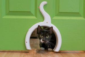 Allie Domestic Short Hair Cat