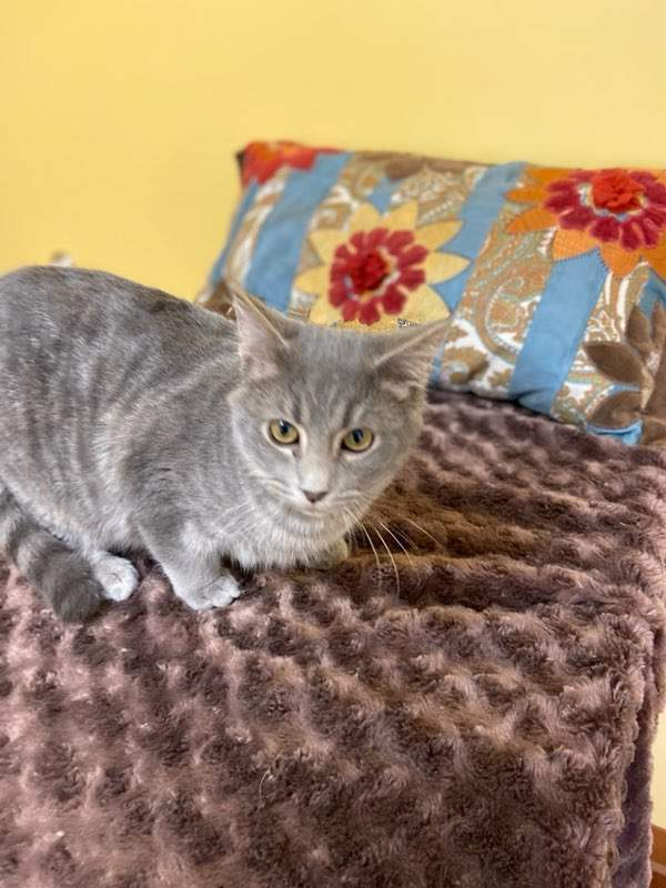 Highlander ADOPTED:), an adopted Tabby in Waverly, IA