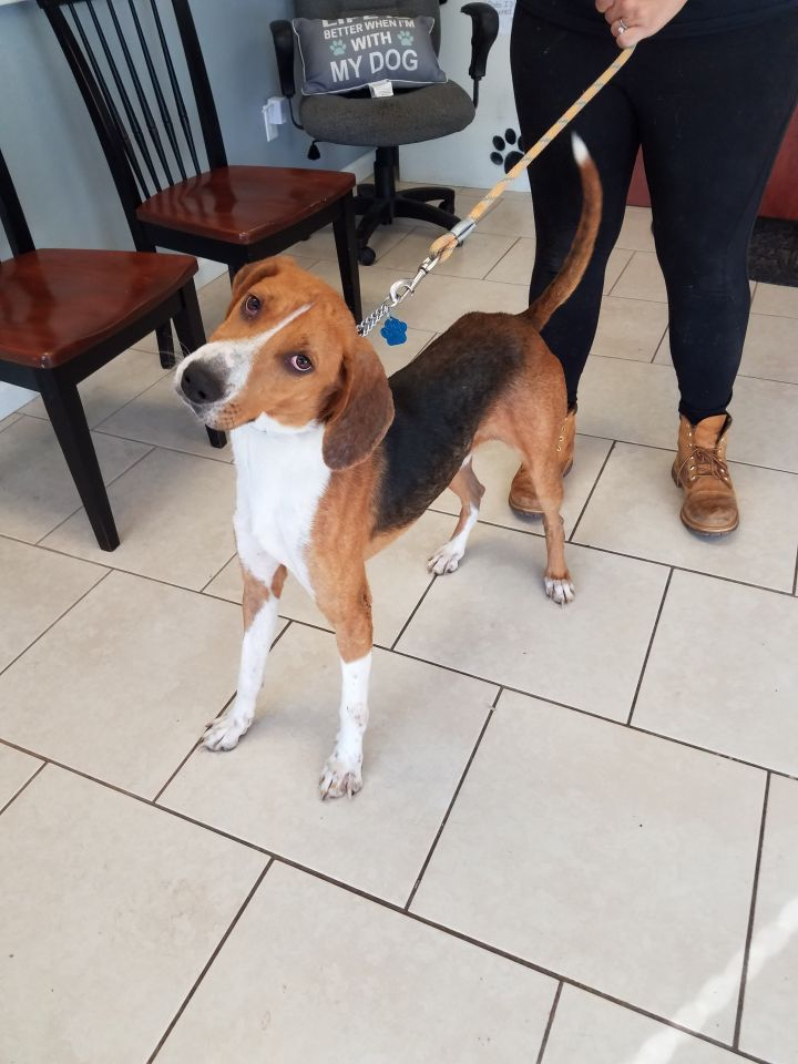 Murphy, an adoptable Hound Mix in Medford, NY