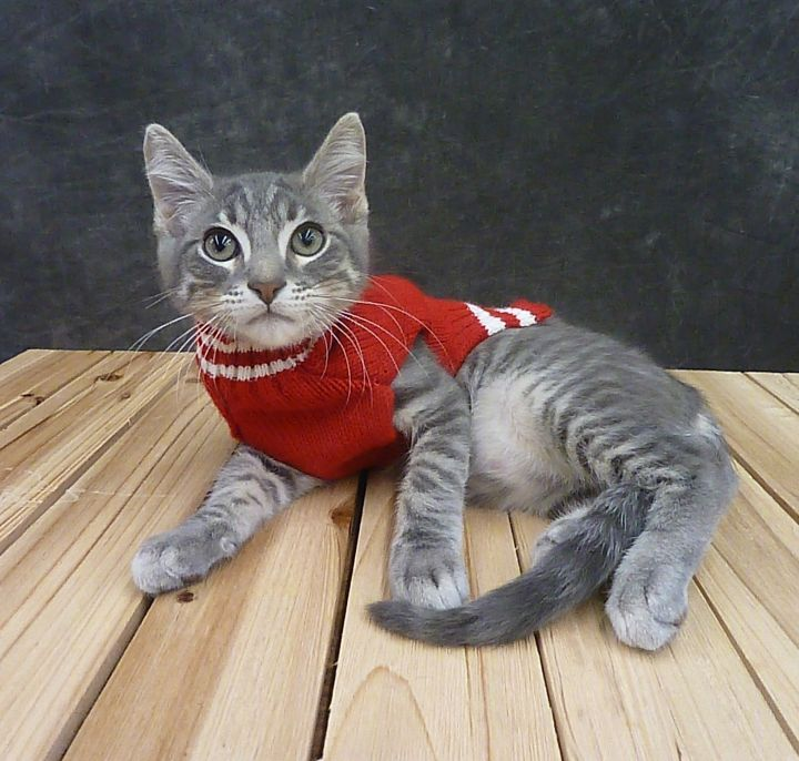 Kit Kat 4