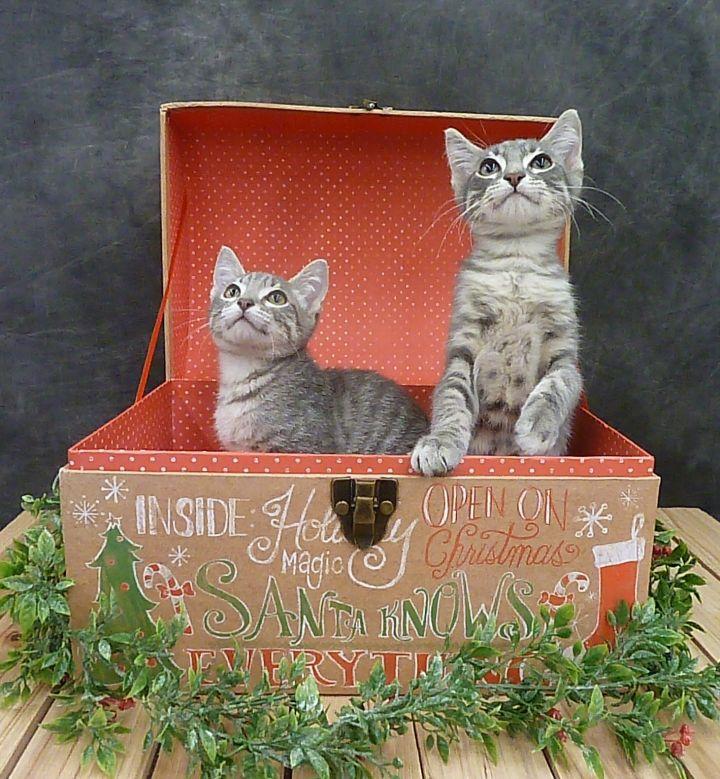 Kit Kat 1