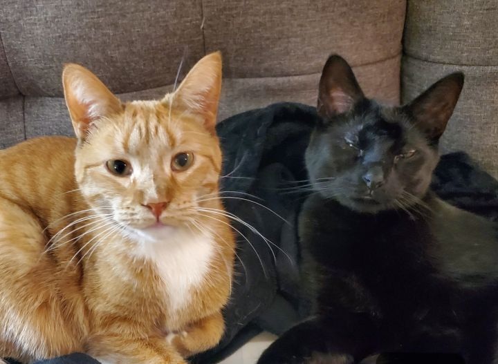 Onyx & Opal (Bonded Pair) - Not Currently Accepting New Applications (Waitlist Only) 2