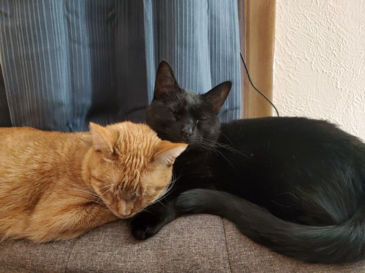 Onyx & Opal (Bonded Pair) - Not Currently Accepting New Applications (Waitlist Only) 3