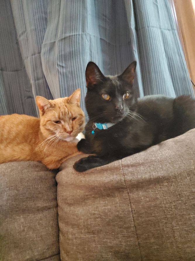 Onyx & Opal (Bonded Pair) - Not Currently Accepting New Applications (Waitlist Only)