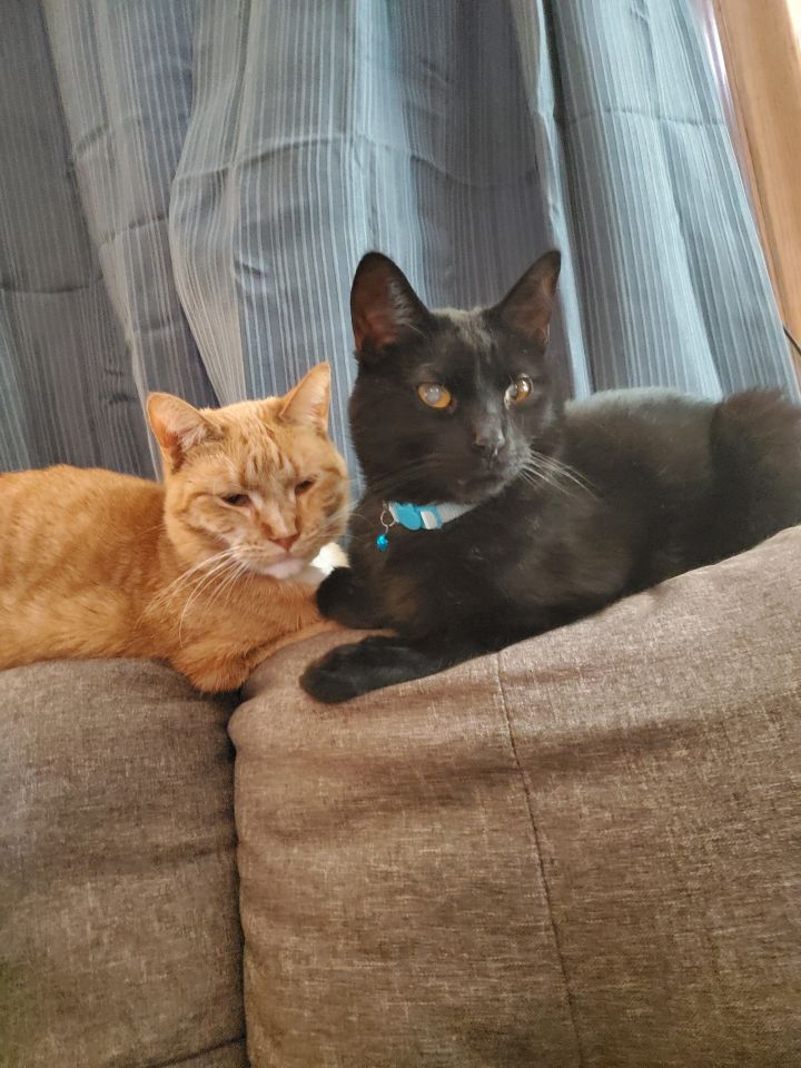 Onyx & Opal (Bonded Pair) - Not Currently Accepting New Applications (Waitlist Only) 1
