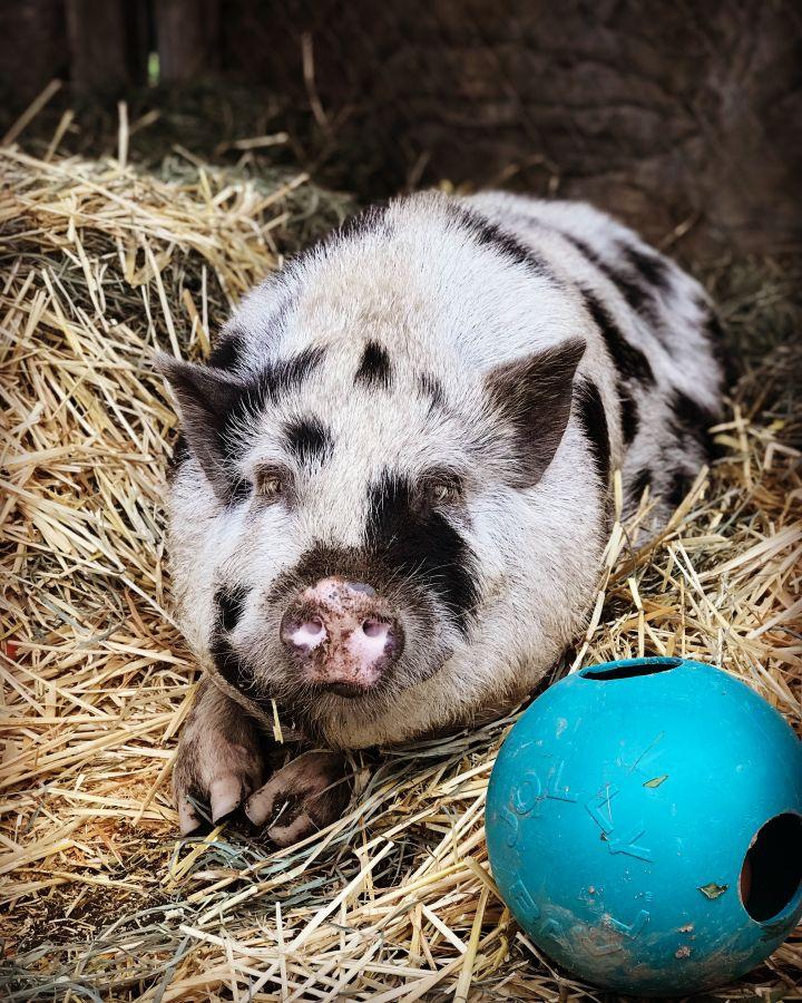 Wilbur 1