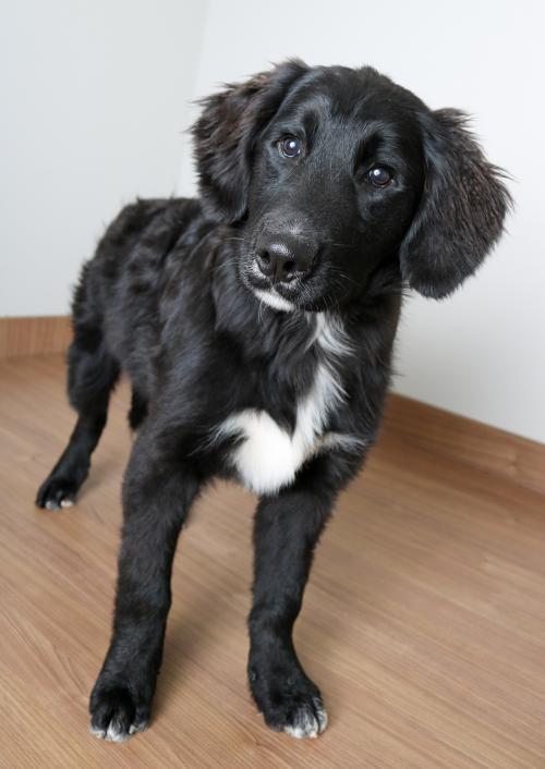 Dog For Adoption Edgar Allan Bone D191636 Pending