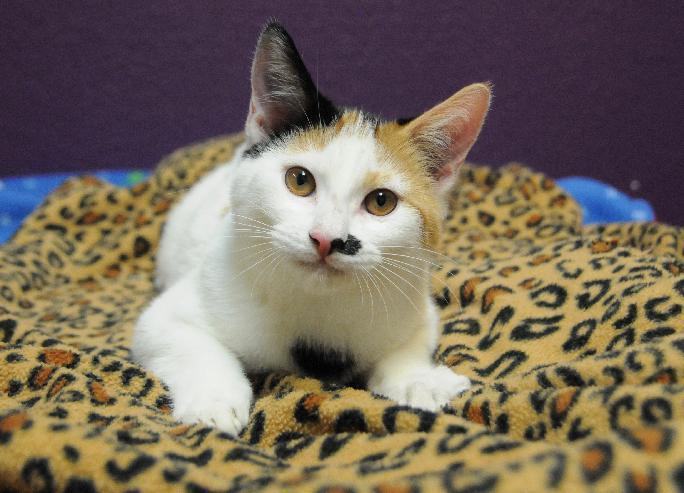 Ms. Kitty 3