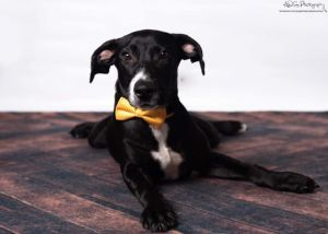 Riley is an energetic and bouncy puppy think Tigger from Winnie the Pooh who loves playing with a