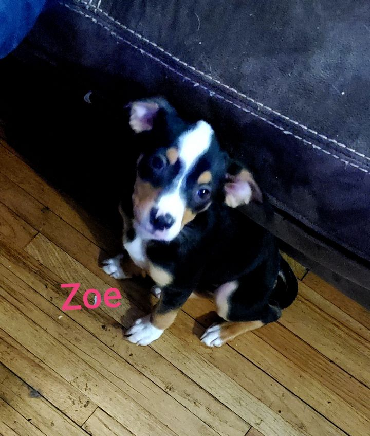 Zoe 1