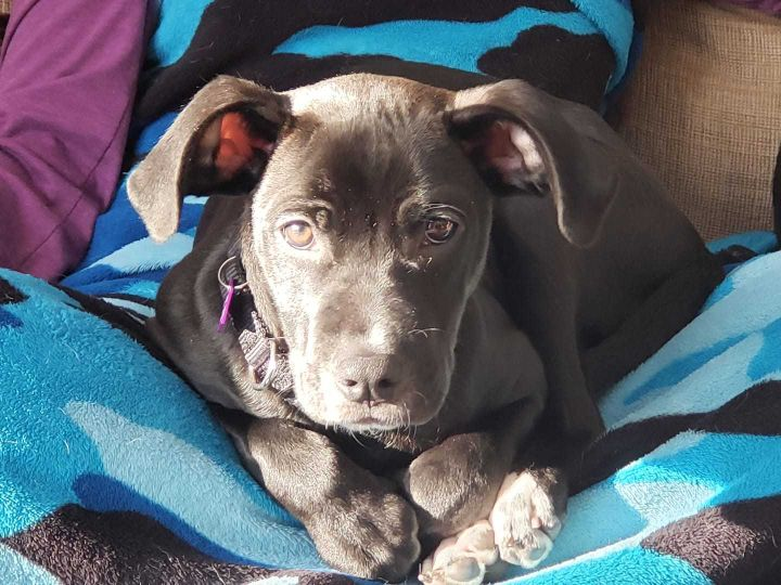 Ranger, an adoptable Mixed Breed in Northwood, NH