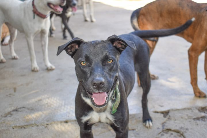 Cici, an adoptable Mixed Breed in Loiza, PR