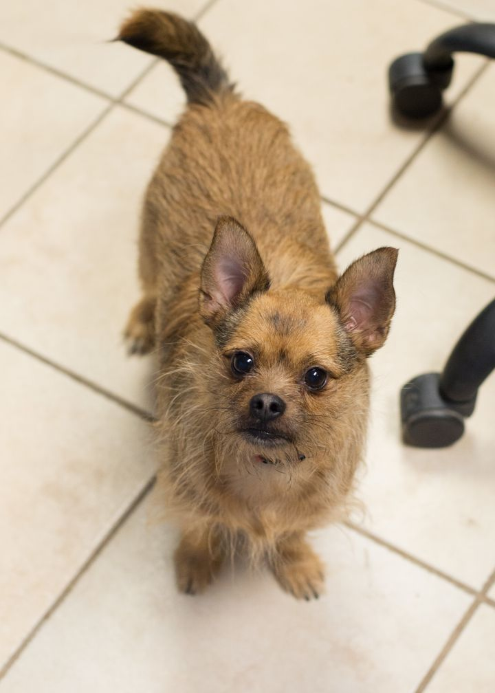 JB, an adopted Terrier Mix in Cape Girardeau, MO