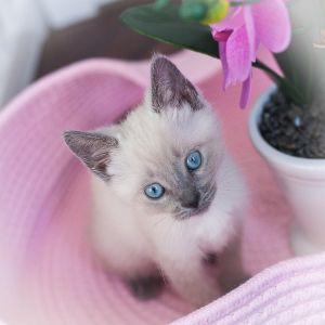 Bleu Lily