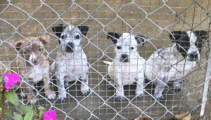 Pups 1-4