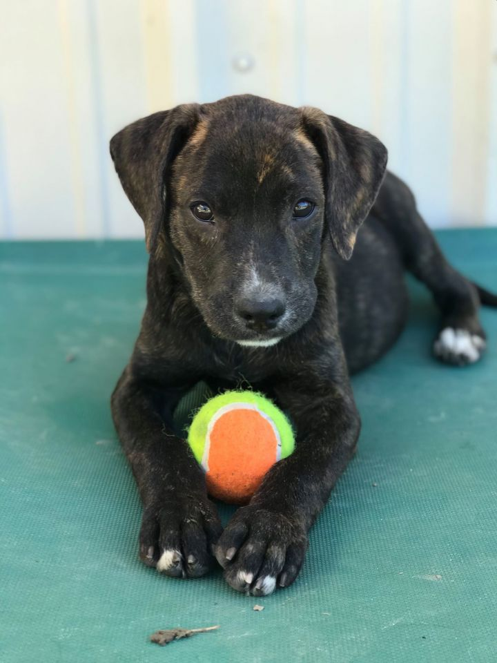 Mia, an adoptable Mixed Breed in Northwood, NH