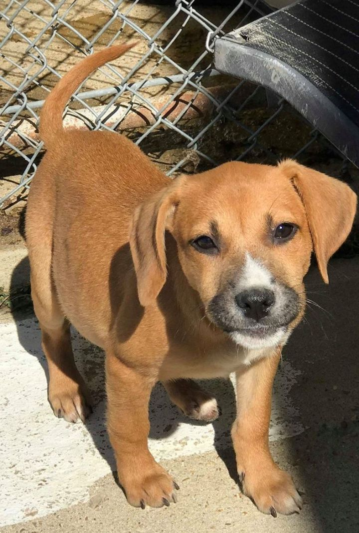Madeline, an adoptable Mixed Breed in Northwood, NH