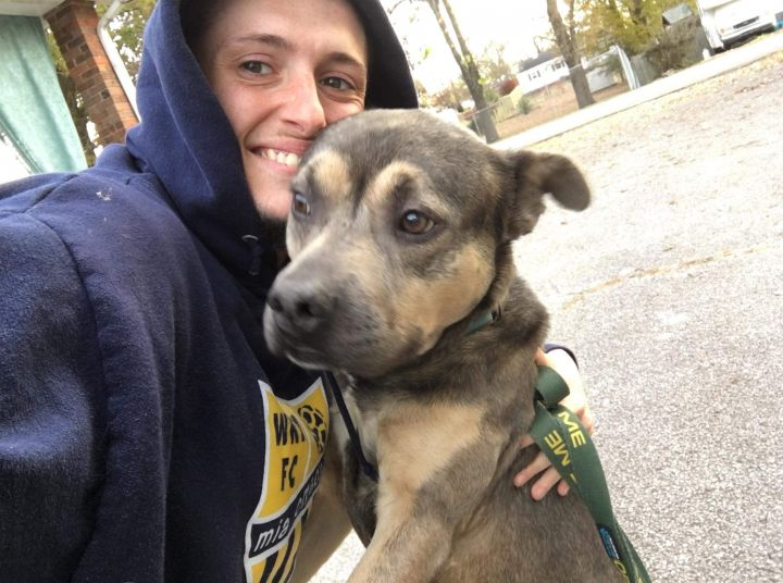 Titan, an adoptable German Shepherd Dog & Pit Bull Terrier Mix in Lexington, KY