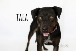 Hello my name is Tala and I am a sweet girl once I get to know you you know how
