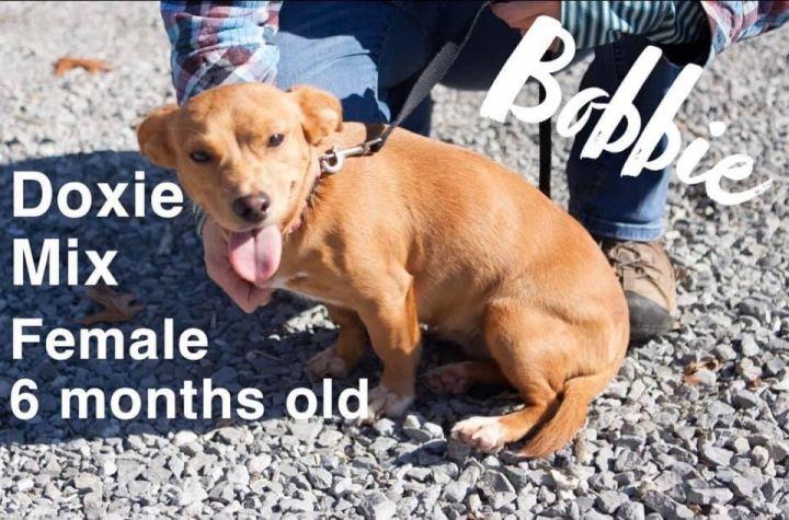 Bobbie 1