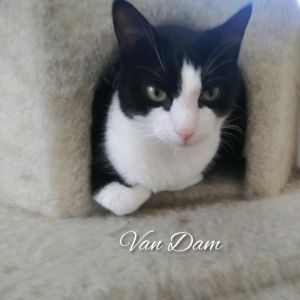 Seeking a patient and experienced foster or adopter for Van Dam This handsome boy was found near a