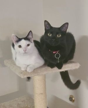 Owl and Tessa